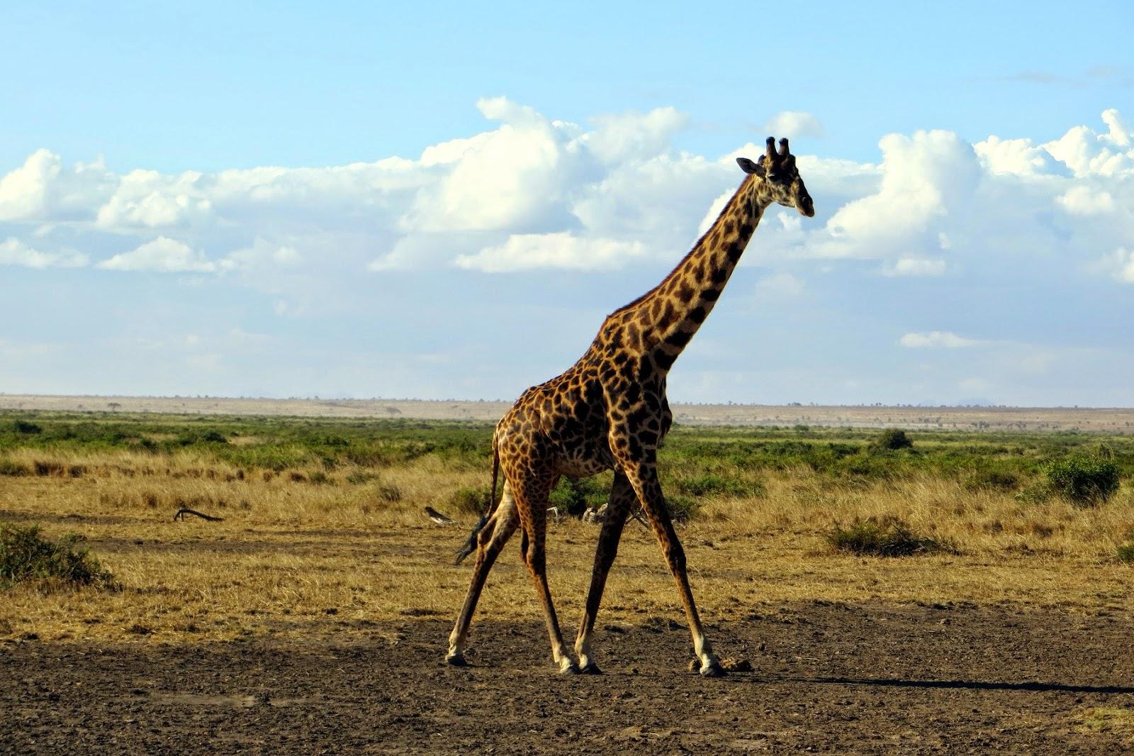 safari in kenya di quattro giorni amboseli