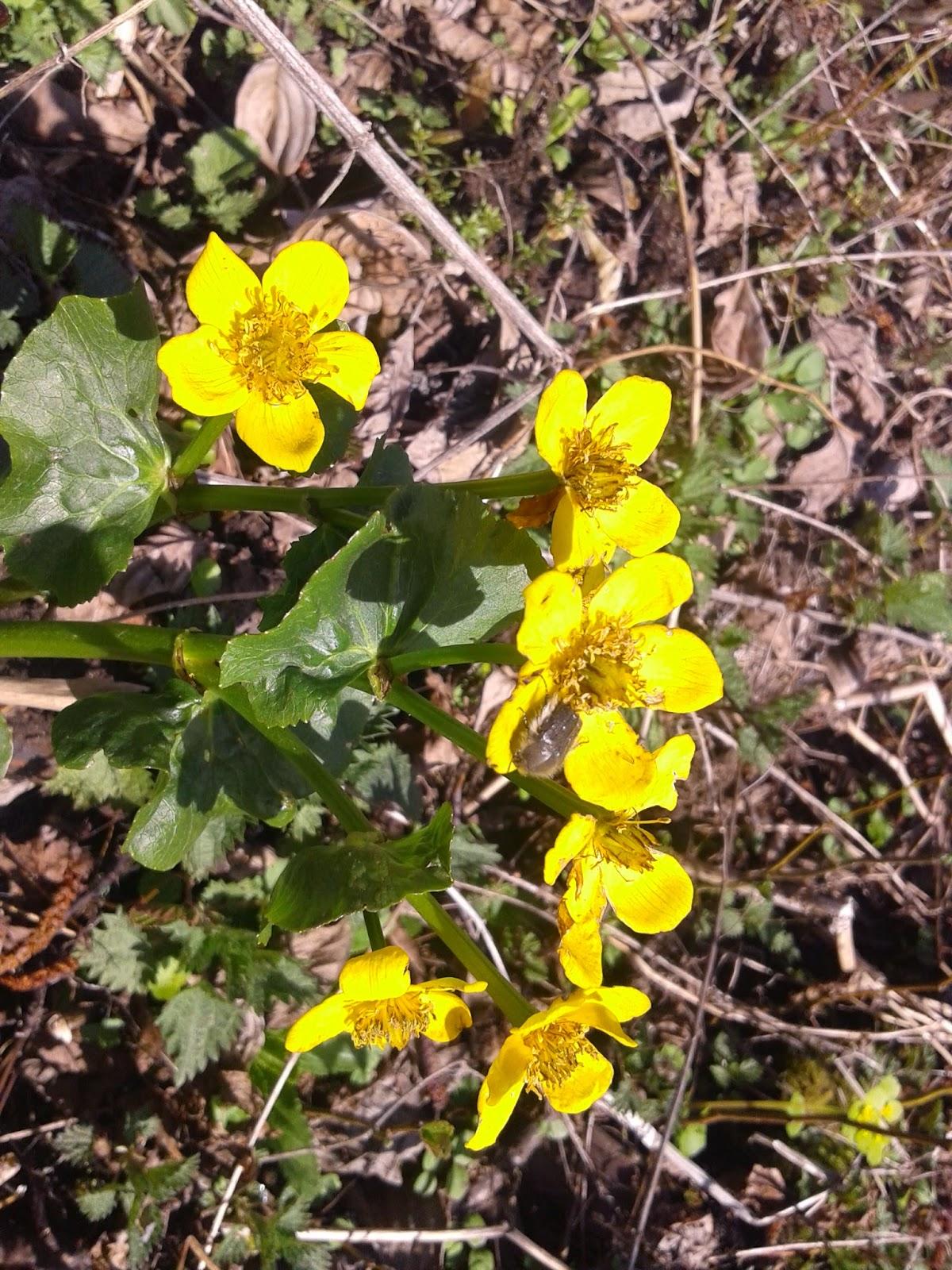 фото, весенние цветы