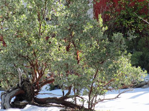 California Native Garden Design