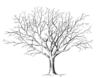 [Image: Clip+Art+TREE+IN+WINTER.jpg]