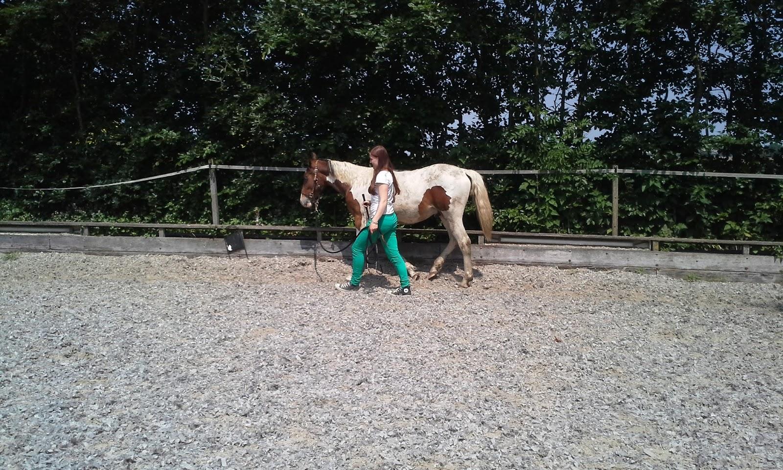 jong paard beleren