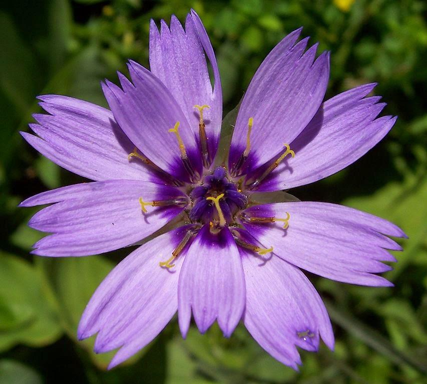 Arte y jardiner a plantas perennes para zonas costeras for Jardineria y plantas