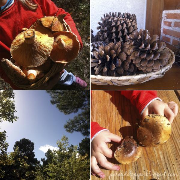 pasandolopipa | planes otoñales: recoger piñas, setas, hojas caidas...