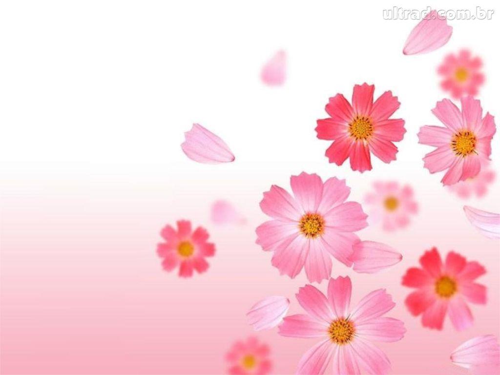 fondo pantalla flor gratis:
