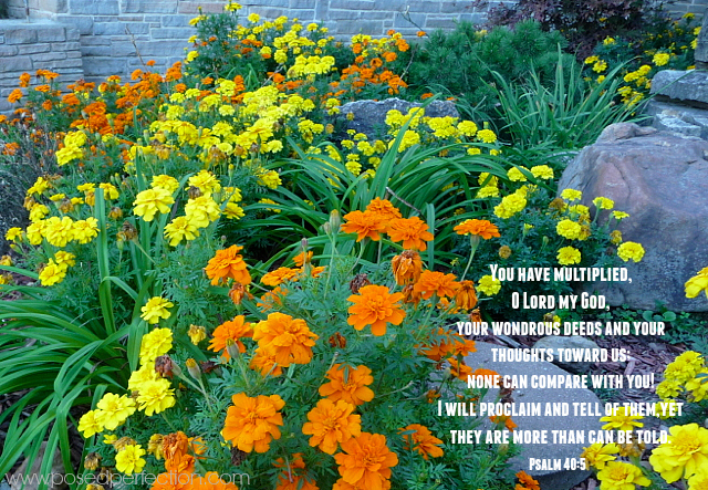 You have multiplied, O Lord my God,     your wondrous deeds and your thoughts toward us;     none can compare with you! I will proclaim and tell of them, yet they are more than can be told. ~ Psalm 40:5