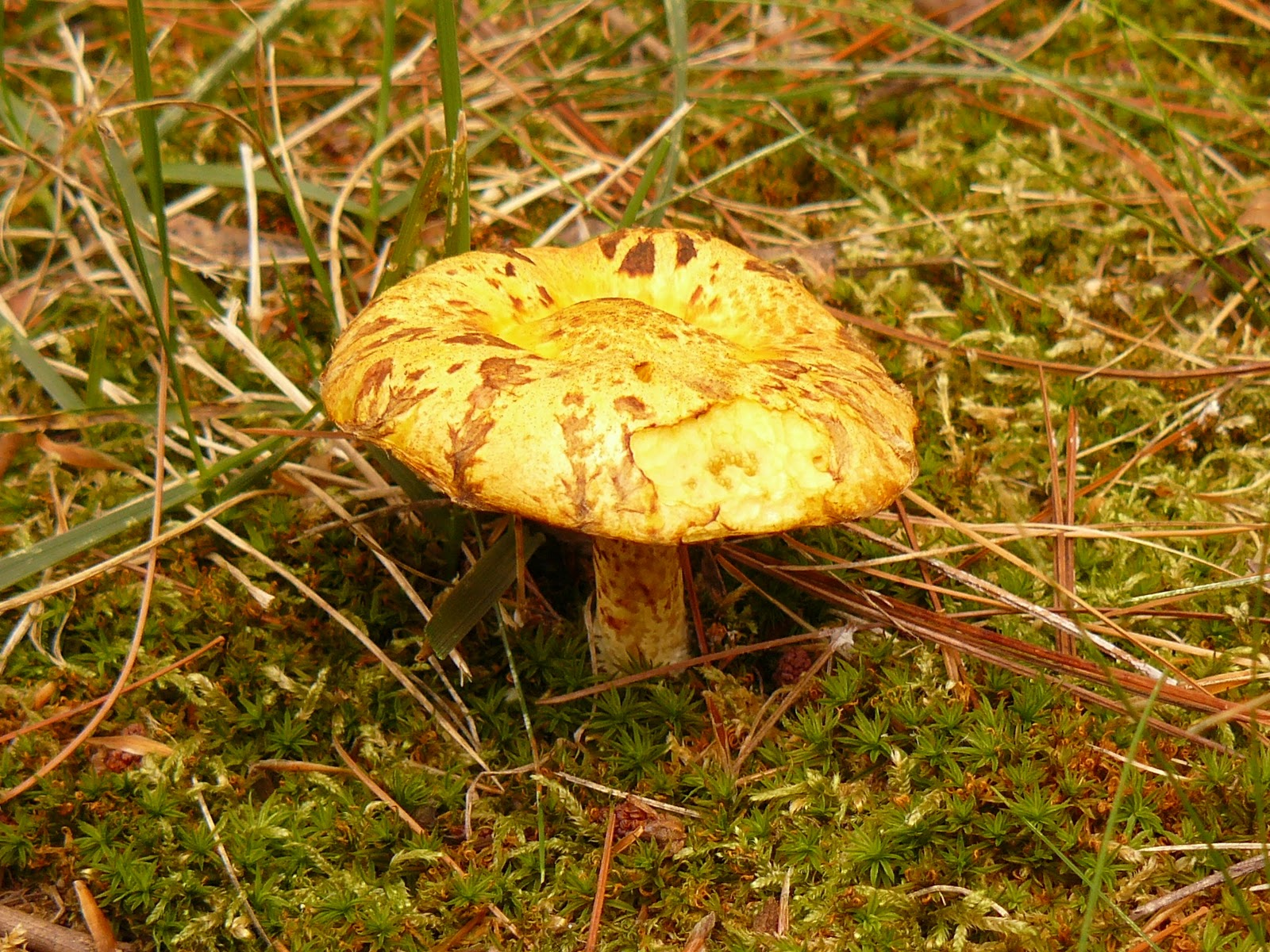 mushroomer 2011
