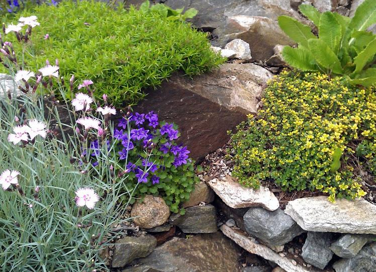 litt forskjellige ting plantet i en liten krok i berget