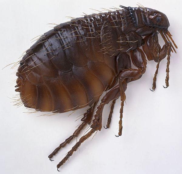 Can Dog Shampoo Kill Lice
