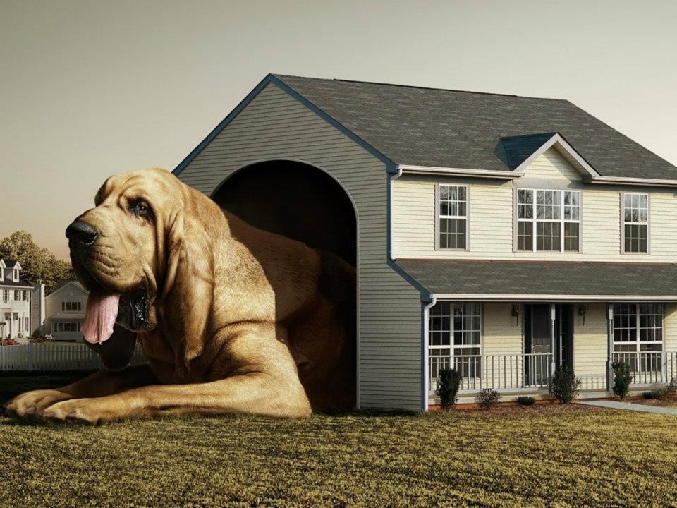 The puppy and the pea casitas para perro for Casas para perros