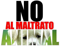 No Mas Maltrato Animal!