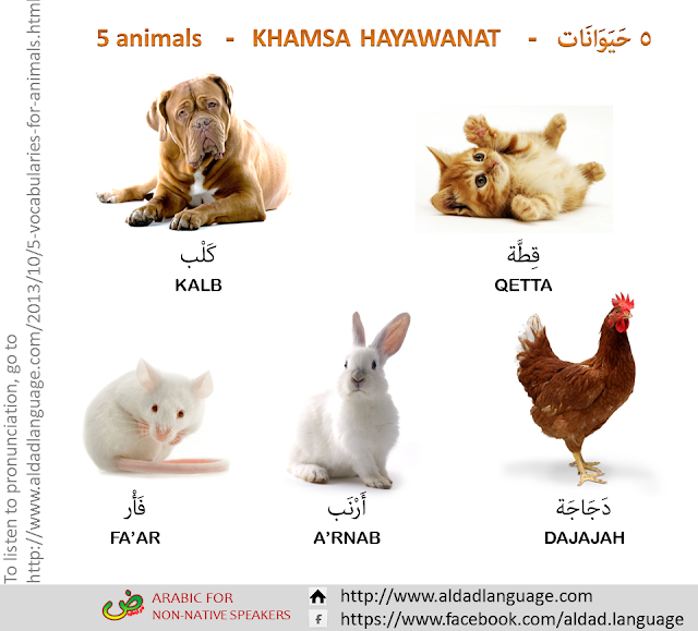 Five Arabic vocabularies for animals