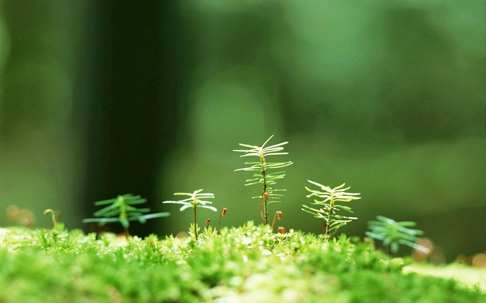 Animated gifs Nature