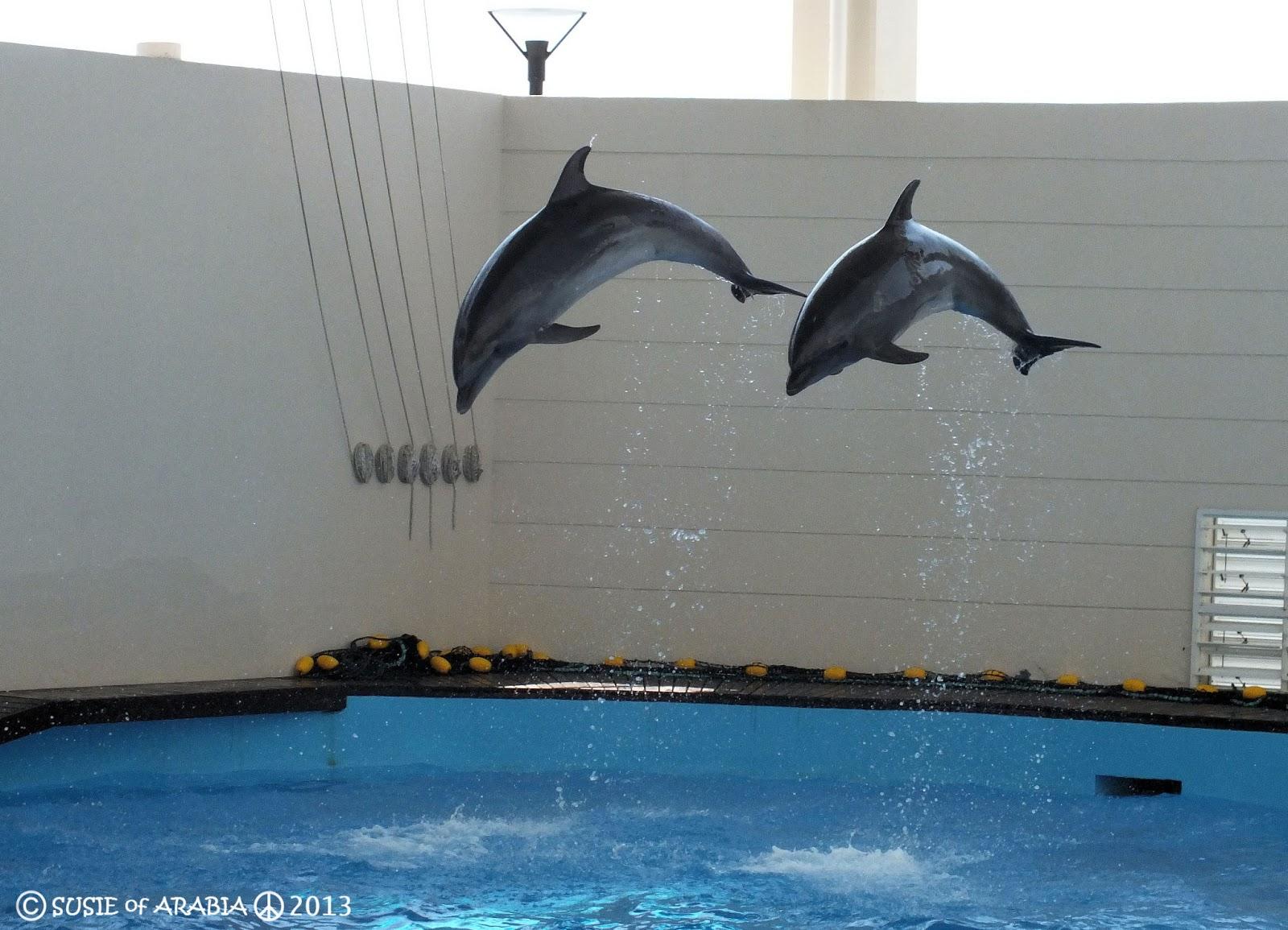 Fish aquarium in jeddah - Fakieh Aquarium