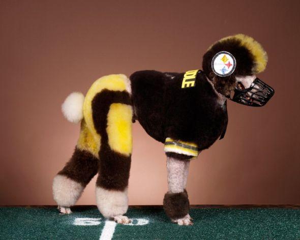 Ren Netherland fotografia animais estimação cães cachorros extreme pets fantasia Jogador de futebol americano