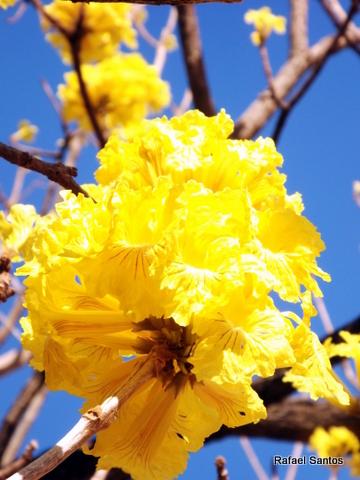 foco3.blogspot.com