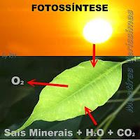 Esquema da fotossíntese das plantas.
