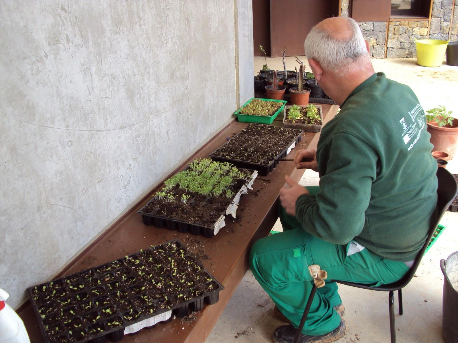 Curso de instalaci n y mantenimiento de jardines y zonas for Formacion jardineria