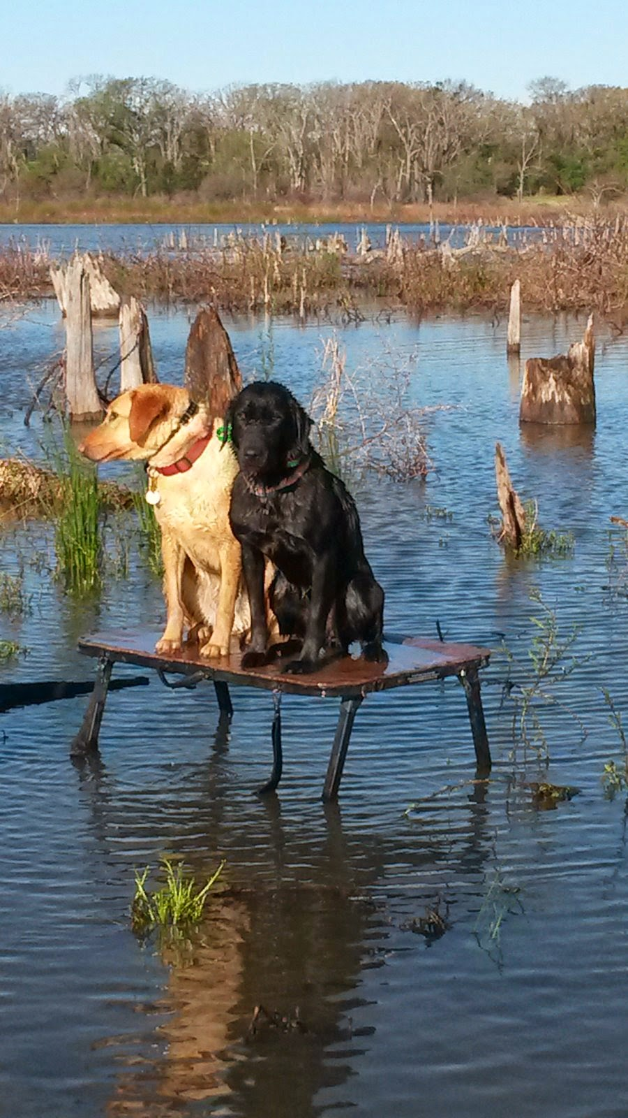 North Texas Duck Hunting|North Texas Guided Duck Hunts