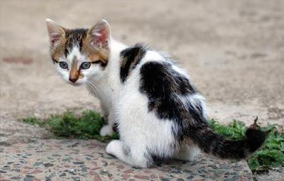 السلطات البرازيلية تعتقل قطة حاولت تهريب أجهزة اتصال لأحد السجون !!!!