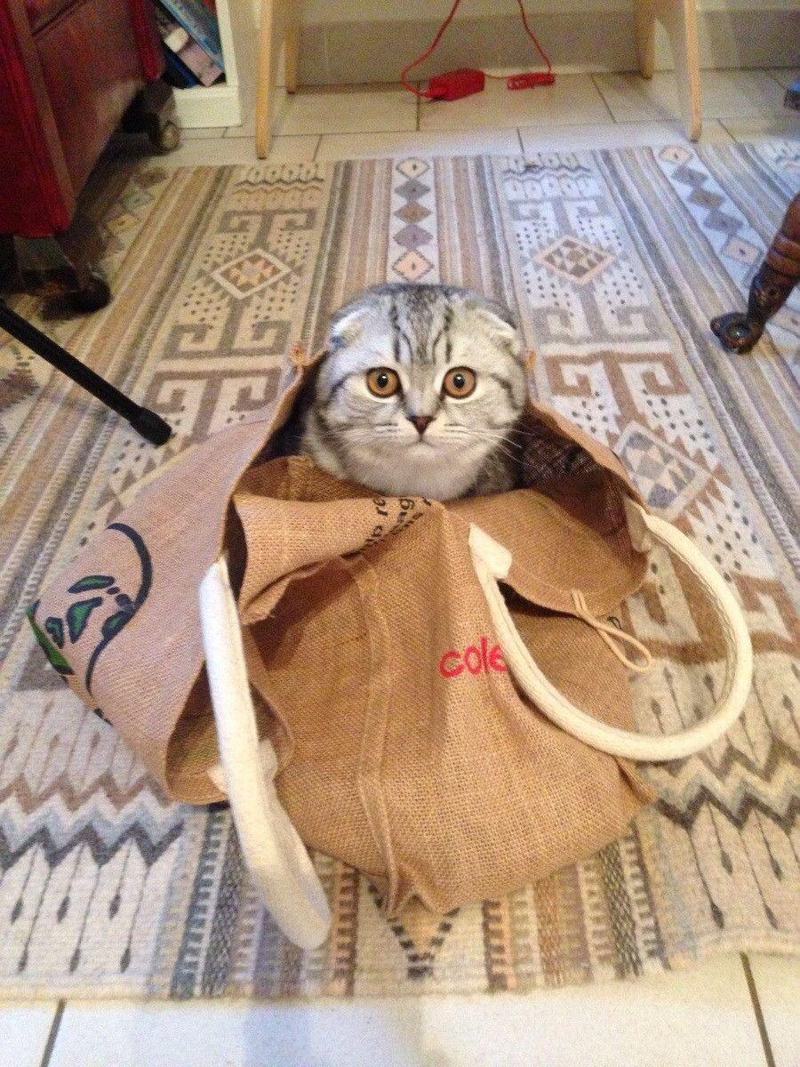 Кот любит играть в сумке