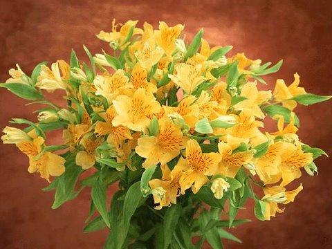 um ramo de flores silvestres