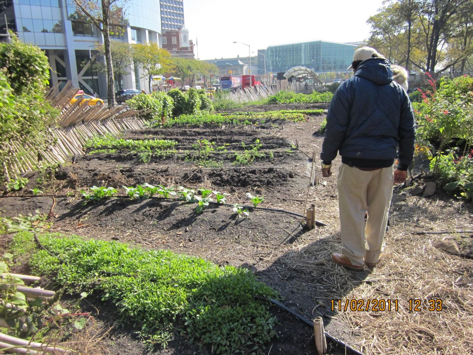 The Bridge Urban Farms Growing Food In The Bronx East Harlem Trip Tothe Battery Urban Farm