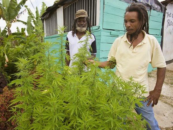comment avoir une ordonnance pour le cannabis