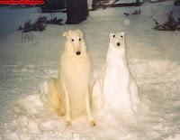 snjesko bjelic, parodija, pas