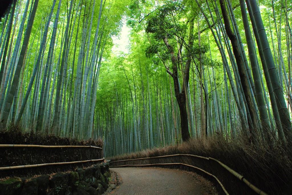 Bosque de bambú de Arashiyama – Japón