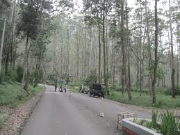 ciwidey/the/best/beatiful/white/creater/in/bandung/travelling/adventure/west/java/indonesia