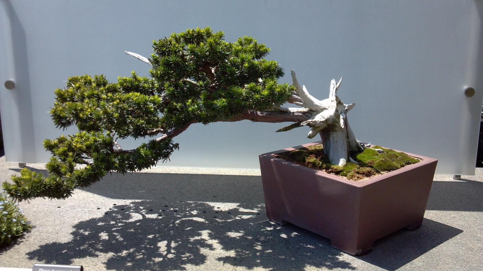 Artist Holiday The Bonsai