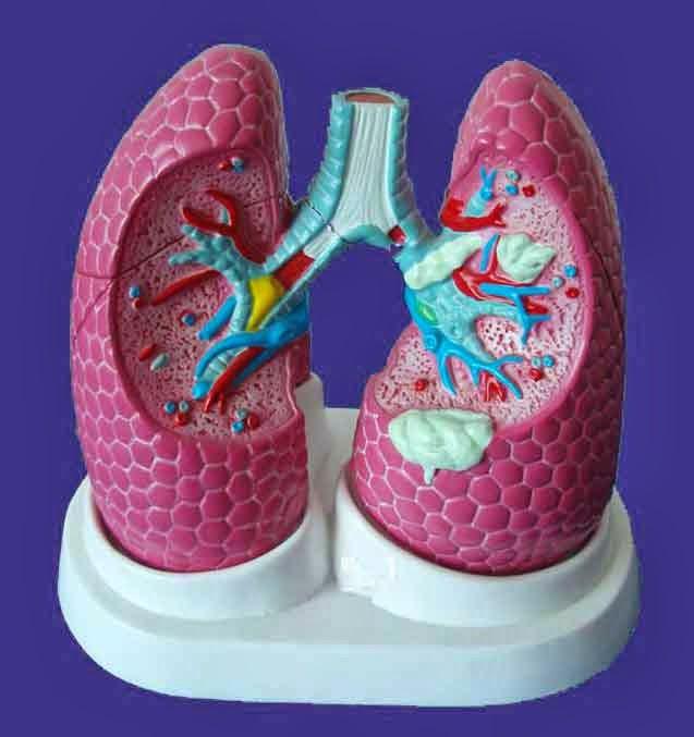 pulmones en tres dimenciones fantastico