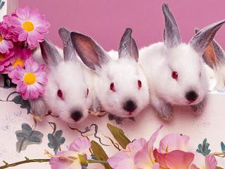 Rabbit And Bunny Wallpaper