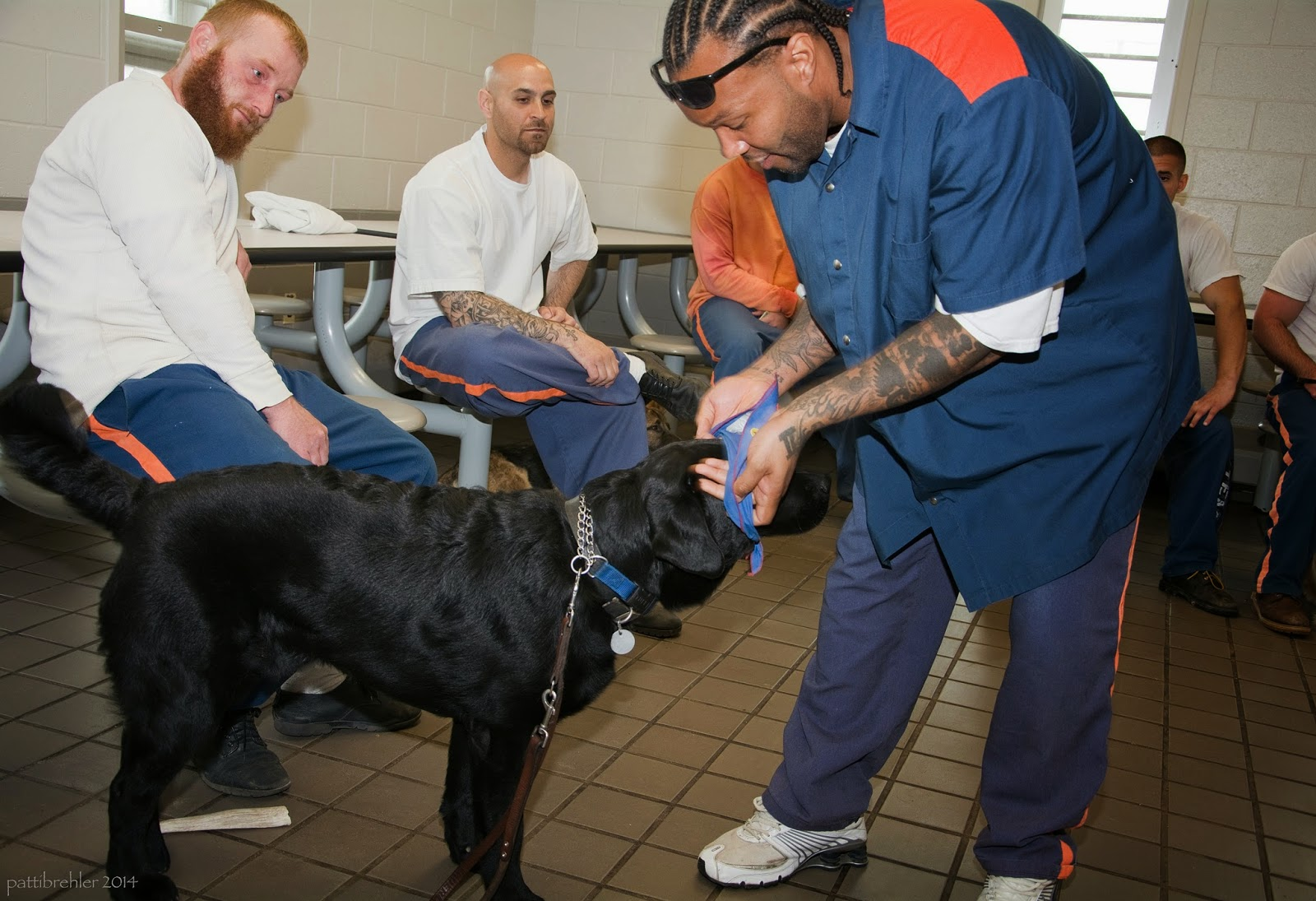 An african american man on the right side of the photo, dressed in the prison blue and orange uniform, is bending over a large black lab. The man is placing a blue bandana over the head of the puppy. Two other men are sitting on stools at the lunch table behind and to the left of the man, watching him. They have the prison blue pants on with white t-shirts.