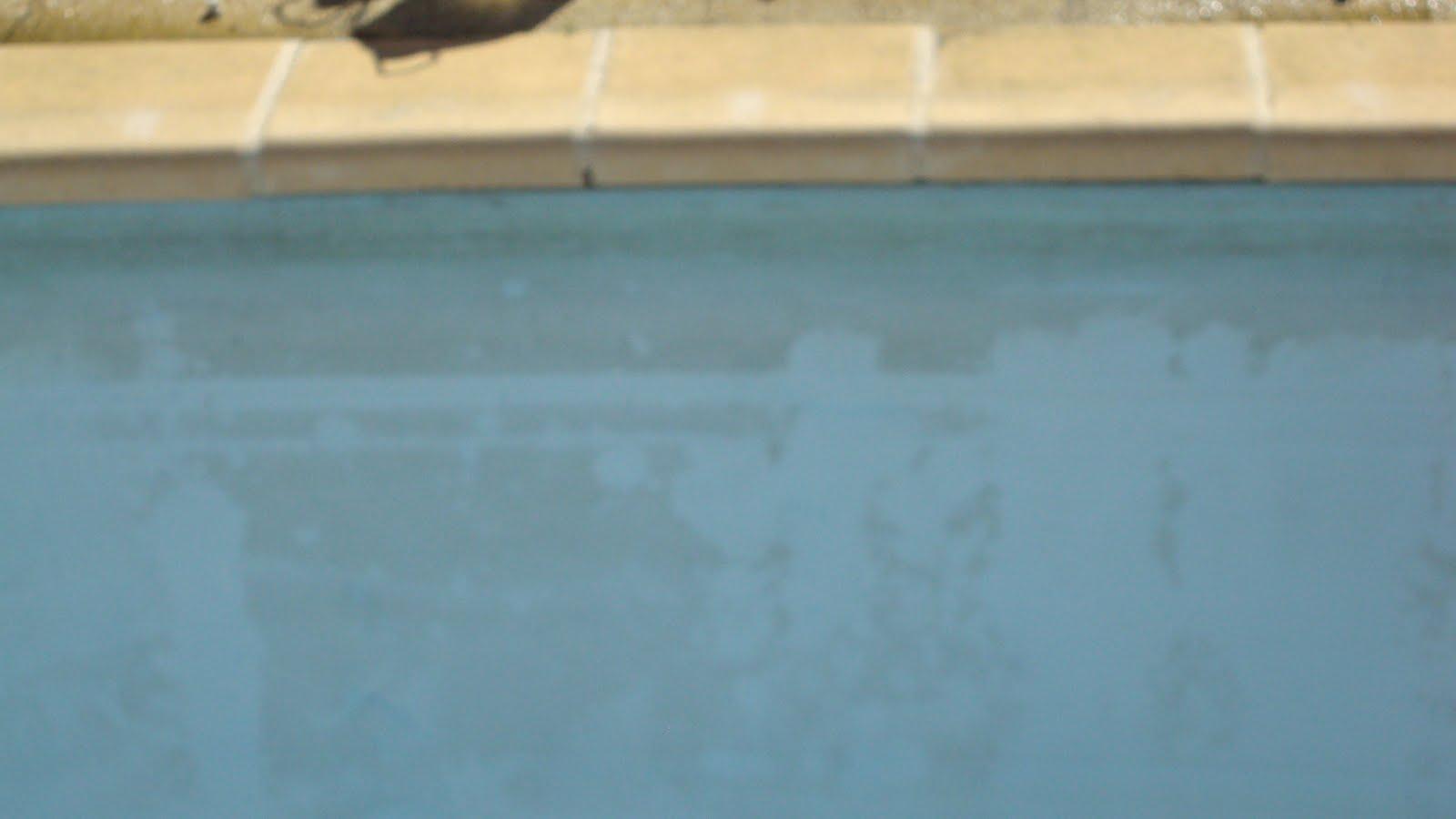Limpiezas fago navarro limpieza de piscinas for Piscina julio navarro