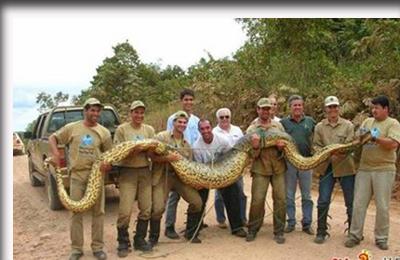 ular_anaconda_12