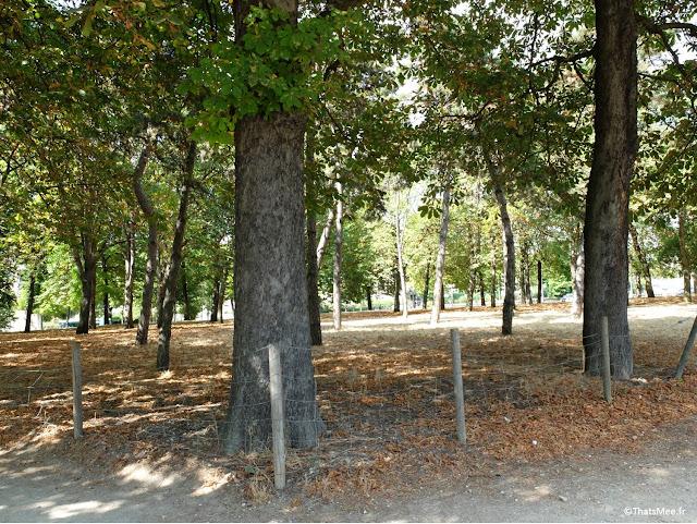 Bois de Vincennes arbres Paris 12ème