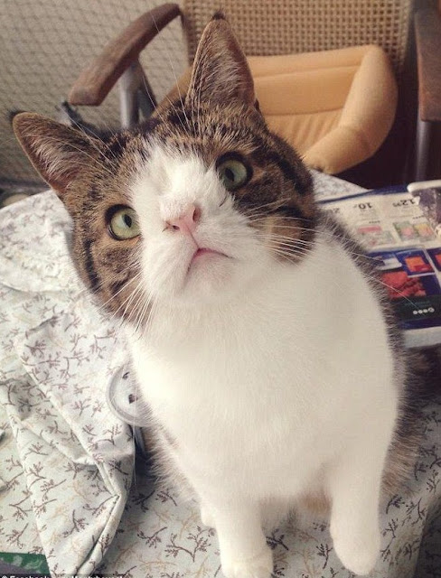 10 Of The Most Famous Cats On The Internet
