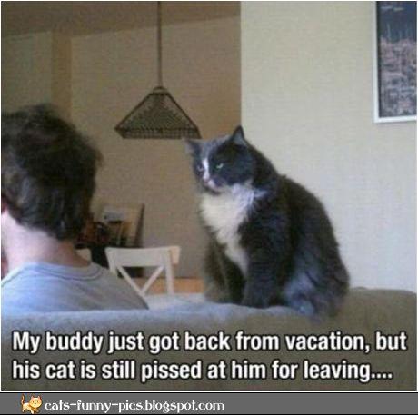 skyrim cat person