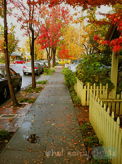 "What Mandy Thinks: Image of a Palo Alto street in the fall: ""Palo Alto in November is stupidly beautiful."""