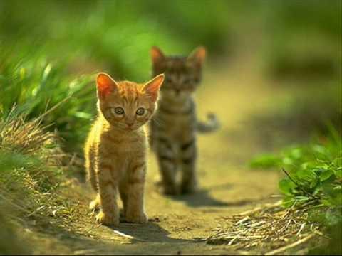 Gatitos tierno animados - Imagui