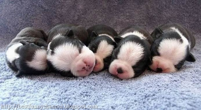 Five sleeping puppies.