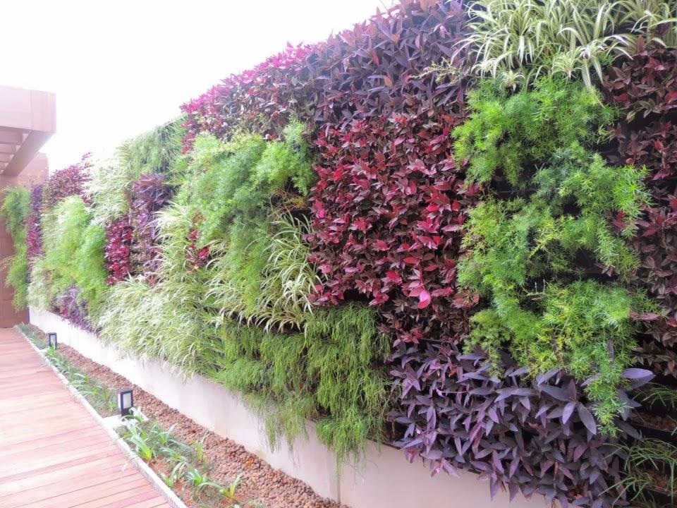 jardim vertical no muro : Jardim Vertical No Muro: MURO VERDE: Como Fazer Dicas e ...