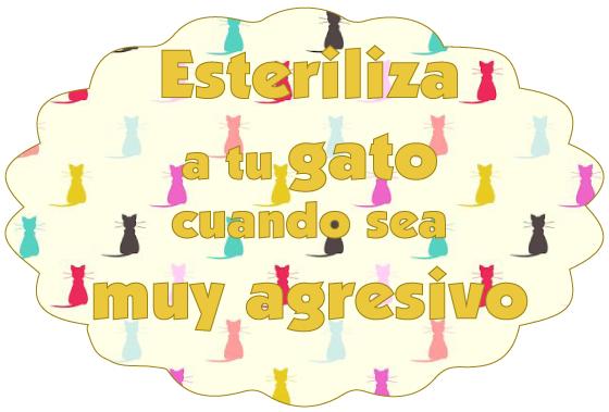 esterilizar-gatos