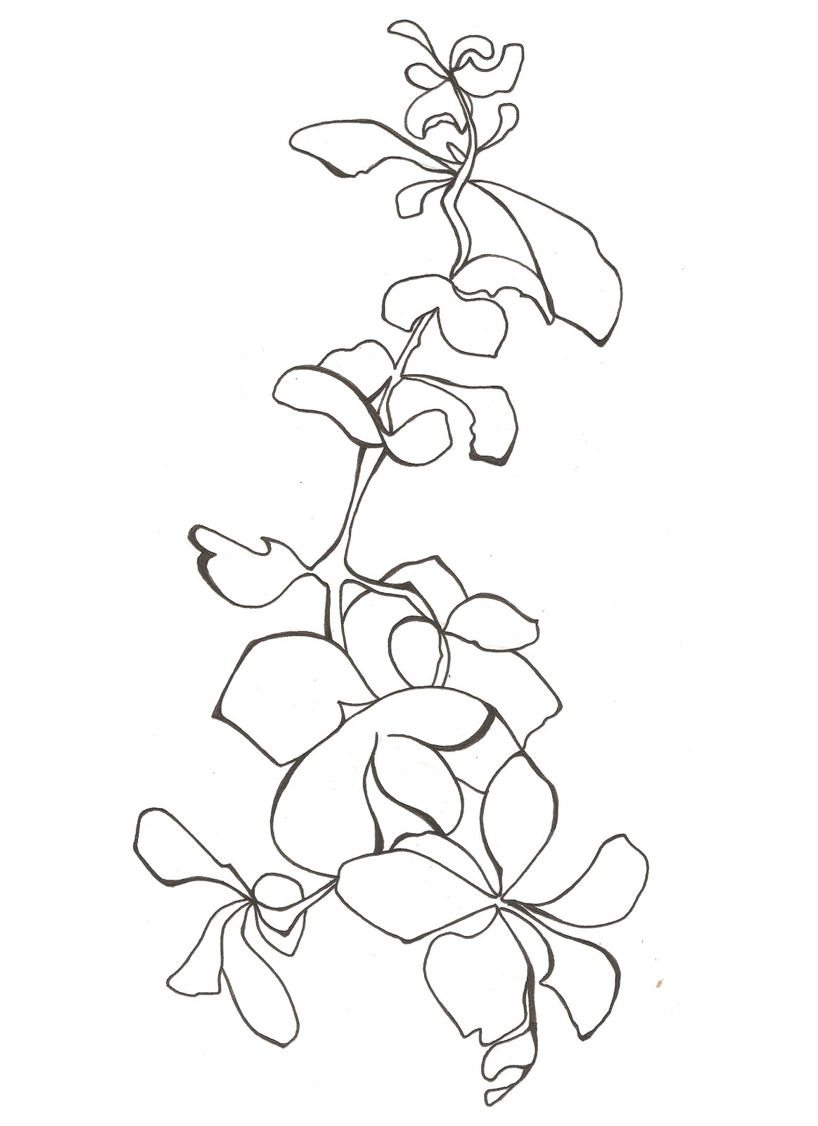 Line Drawing Javascript : Images about sleevie wonder on pinterest orchid