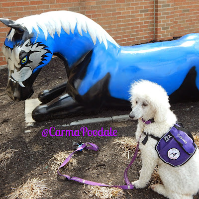 service poodle sitting beside a horse statue