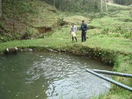 La trucha en la actualidad for Crianza de truchas en estanques