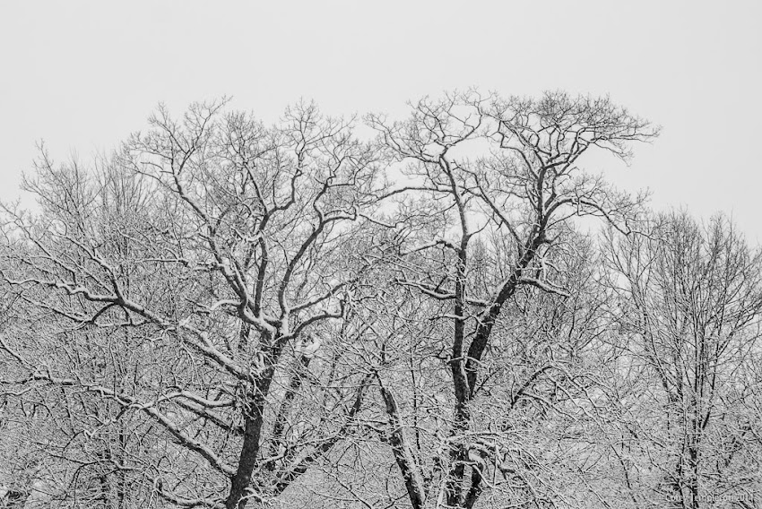 Portland, Maine Winter Snow Deering Oaks Park January 2014 Photo by Corey Templeton