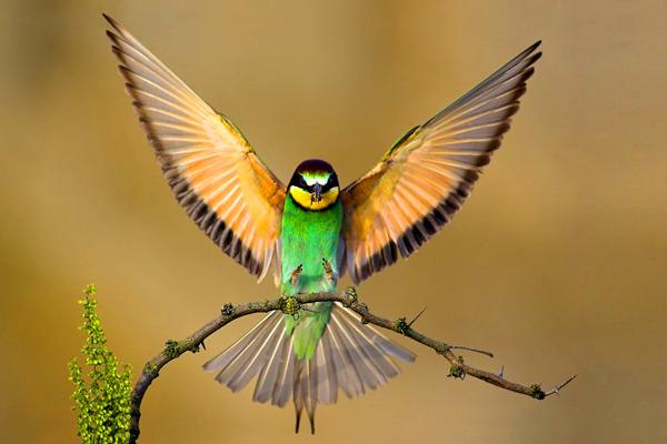 Halcones y demás aves Beautiful-birds-1
