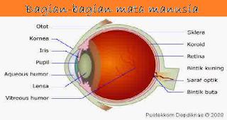 Bagian-bagian mata indrea penglihatan